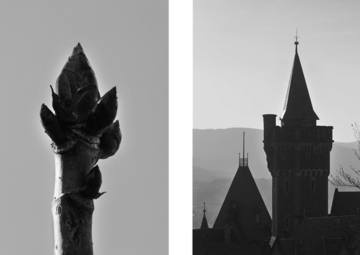 Architecture follows nature - Schloss Wernigerode